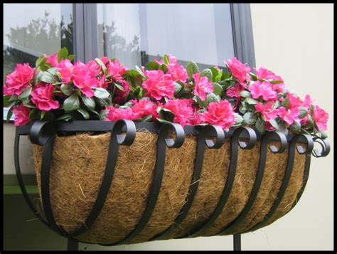 best window boxes all about window the best flowers for window boxes