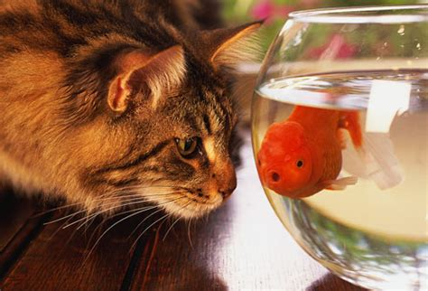 can dogs eat goldfish pets improve your health in pictures