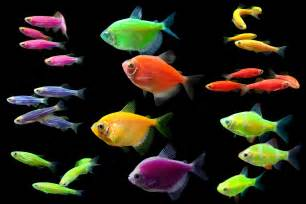 glofish 174 display