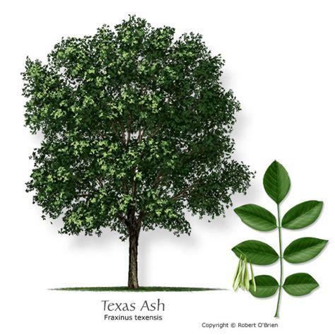 best type of tree for tree selector tree description