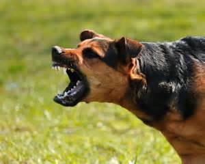 Angry dog baring teeth - Ernst Law Group Dog