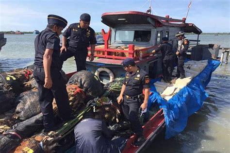 Bibit Gurame Di Aceh upaya penyelundupan bibit dan pohon kurma berhasil digagalkan di aceh okezone news