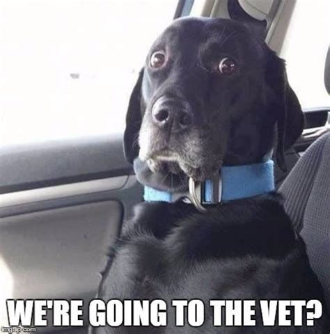 Dog Vet Meme - black lab wide eyed dog imgflip