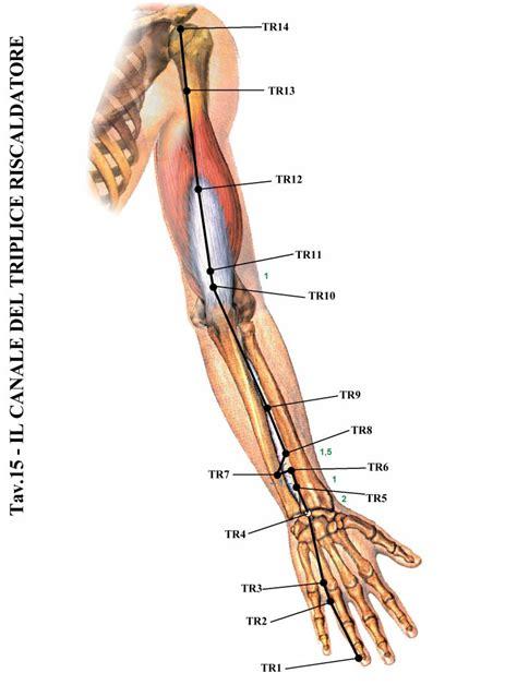 tremore interno corpo i meridiani enegetici