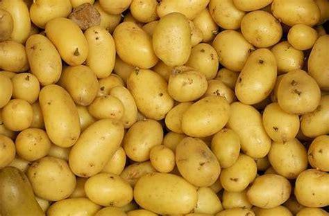riz p 226 tes et pommes de terre comment remplacer le sel