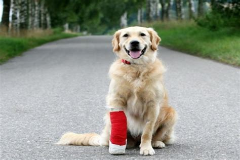 how to take care of a puppy how to take care of your injured simple tips