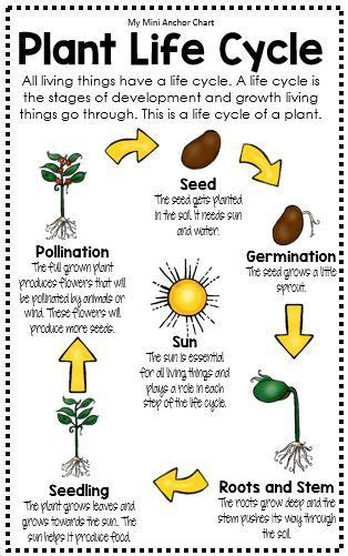 potted biography definition best 25 plant life cycles ideas on pinterest lifecycle
