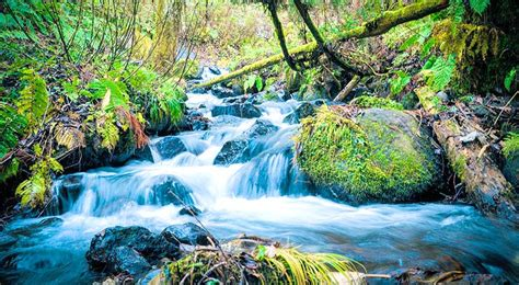 imagenes de paisajes limdos primavera paisajes www pixshark com images galleries