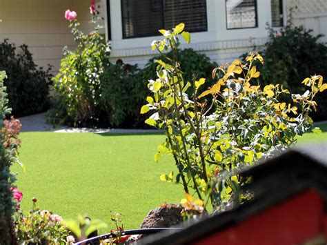 artificial grass nuys california putting greens