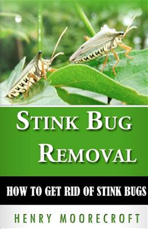 how to get rid of stink bugs in my house stink bug removal how to get rid of stink bugs