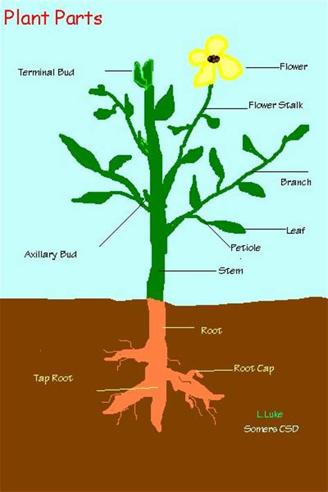 labeled flowering plant diagram 4 best images of flowering plant diagram plant parts