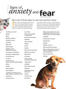 signs of anxiety in dogs will it be the of chaos or calm conscious companion