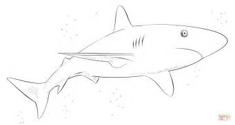 thresher shark coloring page whale shark coloring page click the thresher sharks