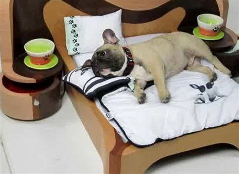 cool bed for dogs 15 creative dog bed design ideas home design and interior
