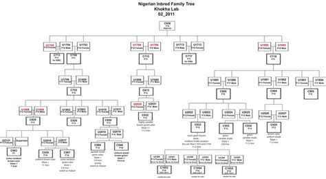 genetic family tree template google search family
