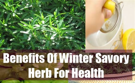 our kosher kitchen benefits of fruits veggies herbs and spices chart savory herb common cold remedies herbs for health
