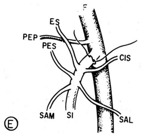 safena interna cirug 237 a vascular actualizada recurrencia de las v 193 rices