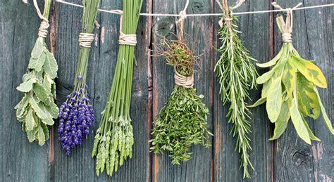 le erbe aromatiche in cucina mix di erbe aromatiche come farle per eliminare il sale
