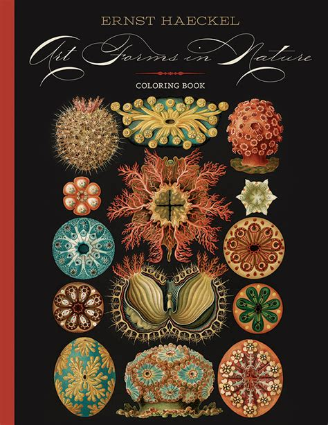 ernst colour library 0714828661 ernst haeckel art forms in nature coloring book coloring book puzzlewarehouse com