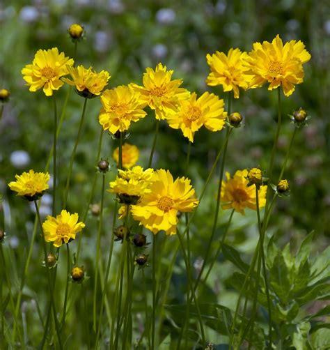 fiori di colore giallo carta da parati a motivi fiori di colore giallo pixers