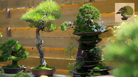 libro bonsai masterclass all you need bonsai master masashi hirao history 2003 2016 youtube