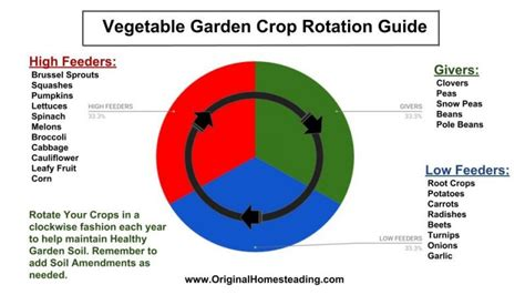 vegetable garden crop rotation plan garden ftempo