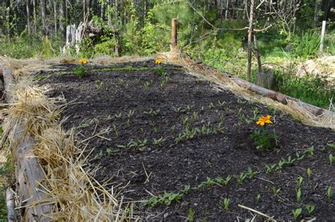 hugelkultur bed an improved hugelkultur bed for older homesteaders