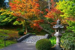 evergreen planting ideas in japanese gardens