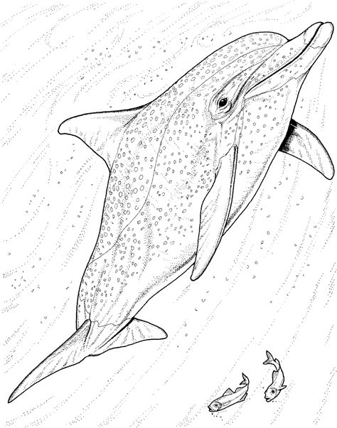 dolphin head coloring page dolphin head coloring coloring pages