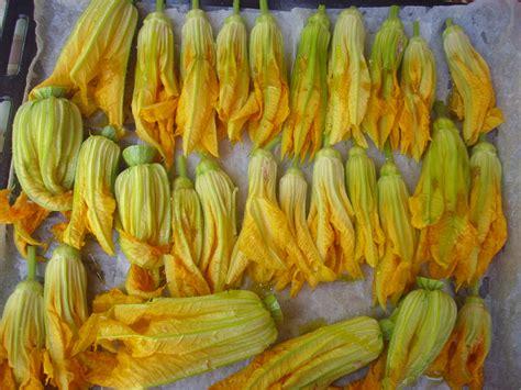 congelare fiori di zucca fiori di zucca ripieni di carne