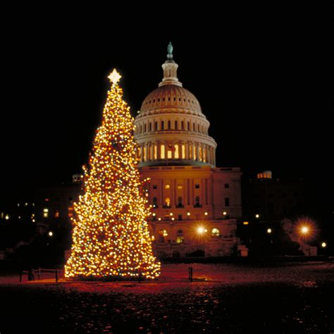 christmas trees dc events in washington d c huffpost