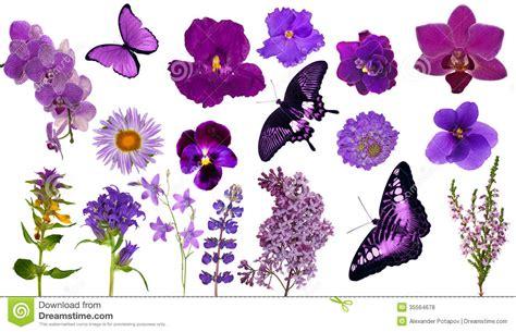 imagenes de mariposas lilas sistema de mariposas y de flores del color de la lila foto