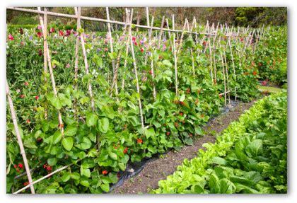 Backyard Vegetable Gardening Guide by Vegetable Garden Ideas On Vegetable Garden