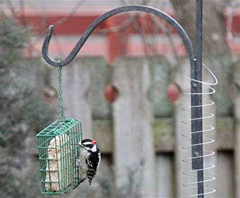 25 best ideas about squirrel proof bird feeders on