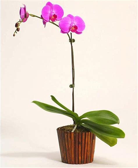 Pot Keramik Untuk Anggrek rental bunga pekanbaru rumah ukami