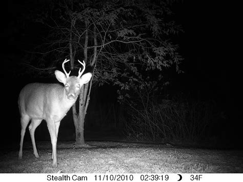 small 10 point buck small 8 point buck bow maryland