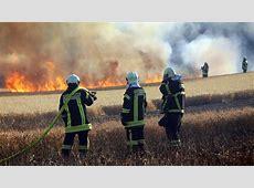 Rostock: Brennender Vogel löst Inferno auf trockenem Feld aus Freemail