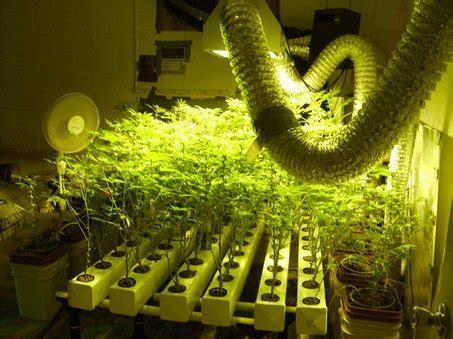 indoor grow room supplies grow in hydro the do s don ts in marijuana hydroponics