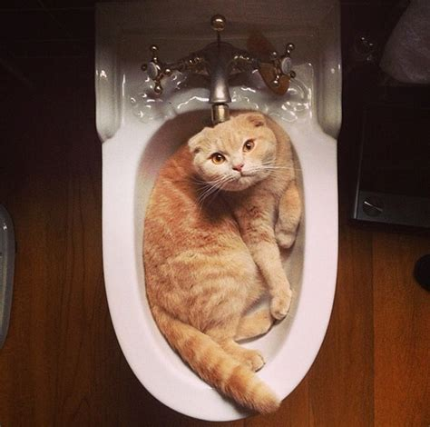 How To Use A Bidet by How To Use A Bidet 50 Shades Of Cats