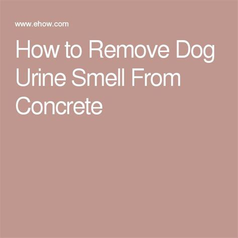 1000 ideas about urine remover on urine - How To Remove Cat Urine Smell From Concrete Basement Floor