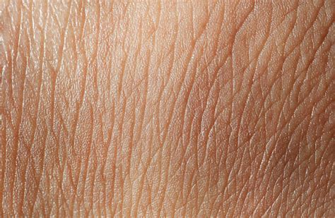 human skin texture stock image image of micro macro 26409147 royalty free skin texture pictures images and stock photos istock