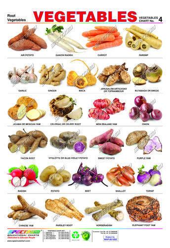 a list of root vegetables common worksheets 187 fruits and vegetables chart pictures
