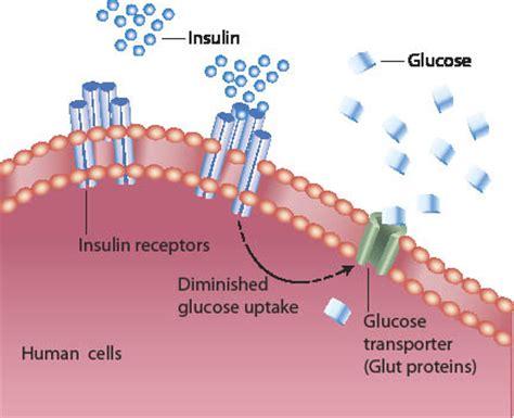 diabetes diagram diabetes jeromejackson
