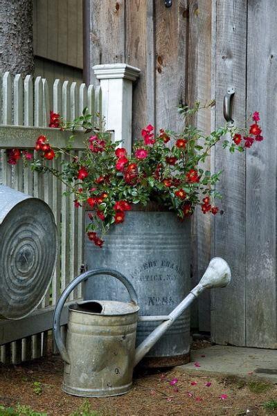 Decorative Tin Containers Galvanized Garden Decor So Popular The Gardening Cook