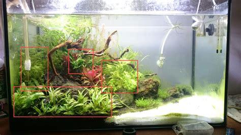 aquascaping forum amanogarnelen sterben garnelen krebse aquascaping forum