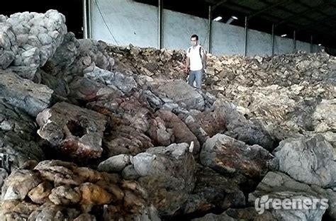 Karet Di Pabrik Timbulkan Bau Busuk Dan Mengganggu Warga Pabrik Karet Di
