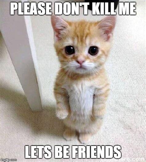 Please Kill Me Meme - cute cat meme imgflip
