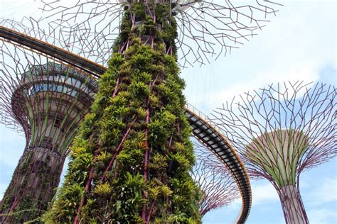 Vertical Gardening Singapore Singapore S Answer To Avatar Supertree Grove At Gardens