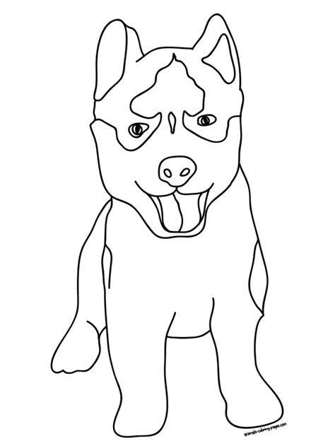 husky puppy coloring pages coloring home