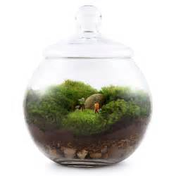 how to grow moss for a terrarium make a terrarium